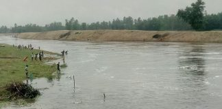 ঠাকুরগাঁওয়ের টাঙ্গনে নির্বিচারে চলছে মা মাছ নিধন