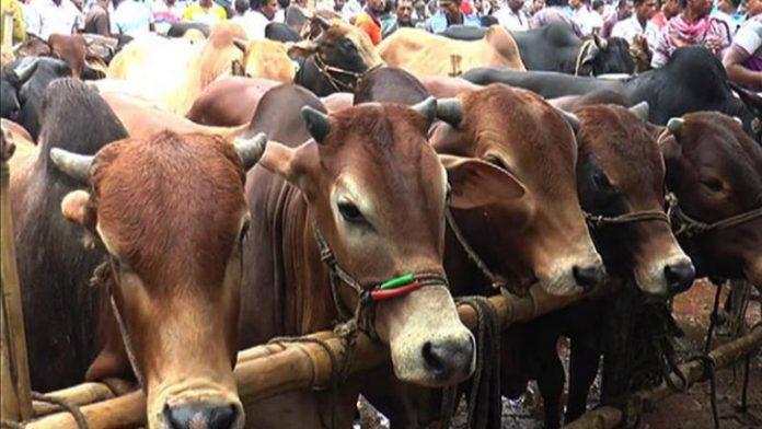 ঢাকা দক্ষিণ সিটি কর্পোরেশনে আরও ৬টি পশুর হাটের অনুমোদন