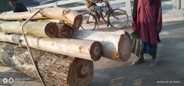 সুন্দরগঞ্জে গাছ বিক্রির অর্থ আত্মসাতের অভিযোগ ইউপি চেয়ারম্যানের বিরুদ্ধে